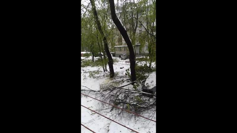 Зеленый Кишинёв в снегу
