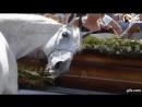 ПЕЧАЛЬ Очень трогательно. .. Прощание лошади со своим хозяином :-( :'( животные то нынче умней человека в 100 раз :-@