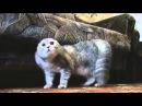 Гроул кота Growl Cat