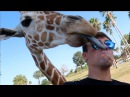 A GIRAFFE LICKED MY FACE!!