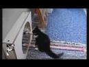Улетные кошки и собаки Приколы с животными
