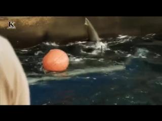Акульи пастухи. Линия огня (5-я серия) 2012