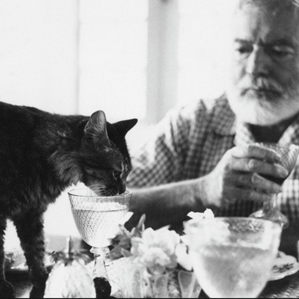 Эрнест Хемингуэй и его любимцы.