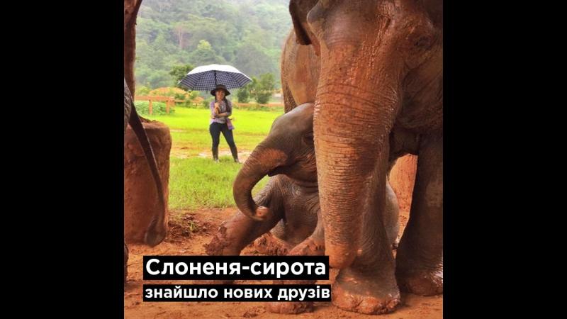 Слоненя-сирота знайшло нових друзів