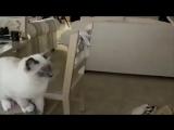 Коты трюкачи