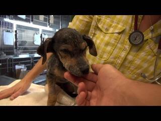 Спасение брошенной собачки без ноги - Jordan's Journey Hope For Paws