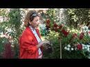 Размножение плетистой розы Сайт