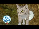 Peter Rabbit - Angry Cat