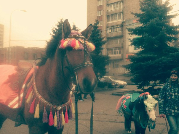 https://vk.com/horses_in_the_city?w=wall-12113906_302546