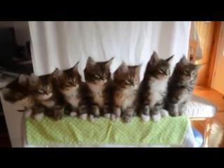 Позитивные котики сделают ваше утро)))