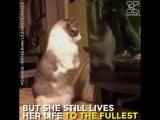 Котейка без передних лапок