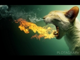 cats-animals-funny-deviant-art-flaming-photomanipulations1 (1200px, 25fps)