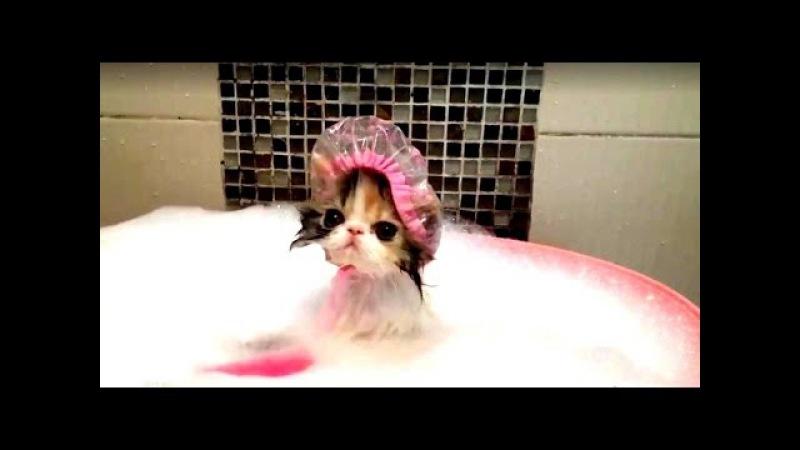 ТОП 10 ! Кошки которые любят купаться ! /TOP 10 ! Cats who love to swim! Top10 o swim!