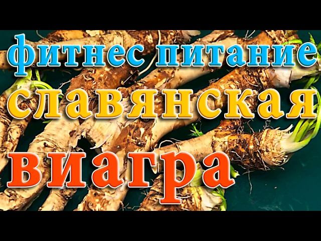 Славянская Виагра Корень Хрена