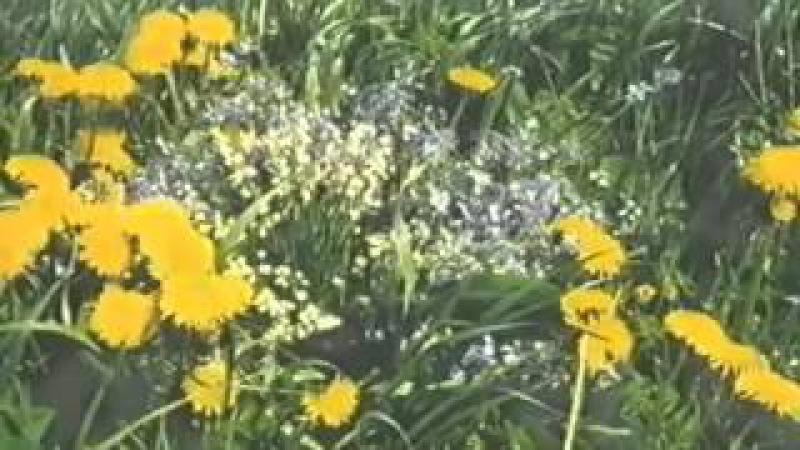 Док фильм Божий дар О целебных растениях
