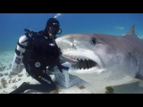 Tiger Shark Ballet with Vincent Canabal