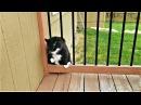 Видео приколы про животных смешные видео домашние животные