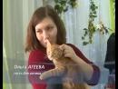 Телеканал ЭКСПРЕСС В Пензе в День котика бездомные коты нашли себе хозяев - 2015г.