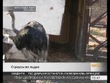 На страусиной ферме возле села Тешебс обнаружили замерзающих страусов.