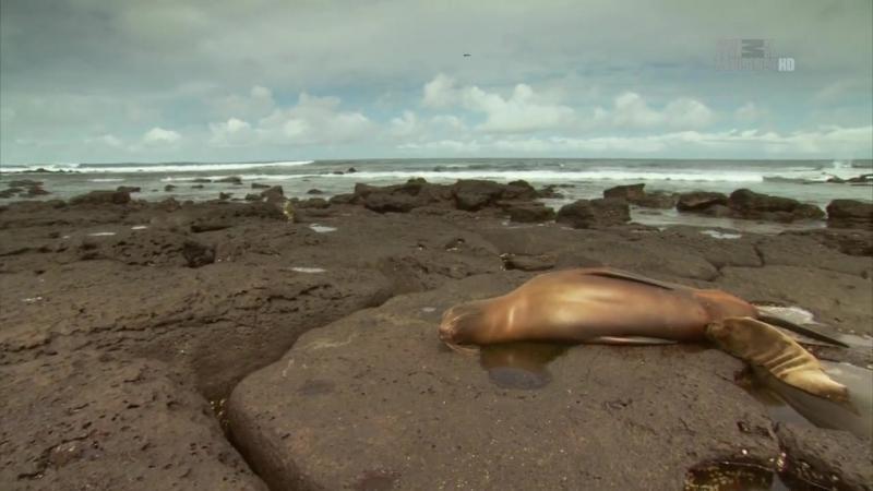 Неизведанные острова - Галапагосы