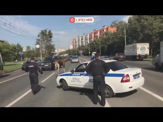 Лось выбежал на трассу на юго-востоке Москвы