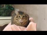 Слушаем оперу вместе с котом