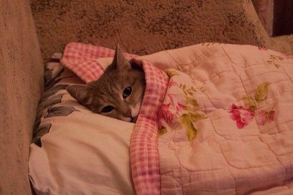 Настроение: грустняво тюленить в кроватке