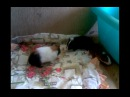 Три свина_01 часть_14.05.2010
