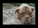 Из земли торчала голова собаки но что было дальше поразило всех