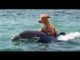 Emotional and Amazing Animals Rescuing Other Animals True Friendship HD