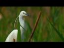 Птичье озеро Аггёль. Aggol. Ağgöl. Огарь. Ruddy Shelduck дикий мир и поведение животных в нем