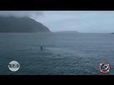 Майкл Фелпс проиграл заплыв на 100 м большой белой акуле.