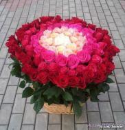 я не просто люблю розы а обожаю