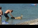 Туристы активно загрязняют необорудованные пляжи Сочи