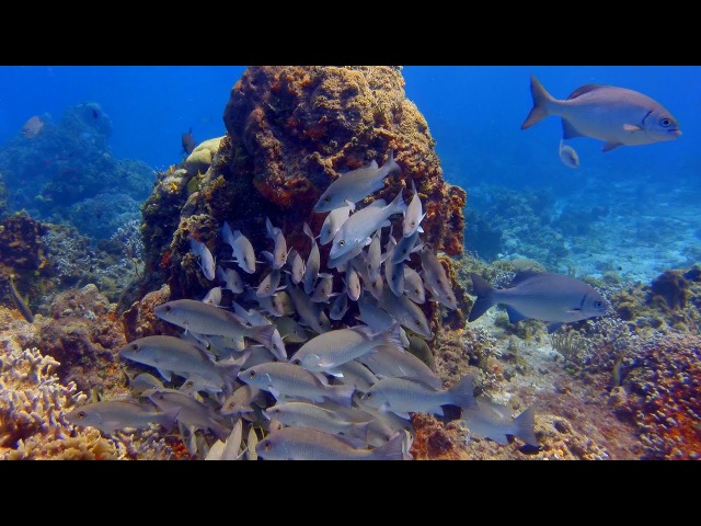 Cozumel Undersea World (4K 2D)- An Underwater 3D Channel Film