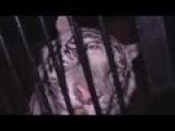 Оренбург. Фура с тиграми попала в ДТП. Спецоперация по спасению тигров