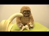 halloween costume monkey
