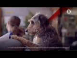 Реклама тарифы Водафон Ред Vodafone Red (5 канал, апрель 2017)