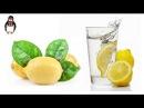 Как правильно пить воду с лимоном и чем она полезна