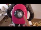 Рюкзак для переноска животных (MT-SHOP)