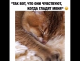 Мрр...как мягко 😍😄#ptencoffby @hosico_cat