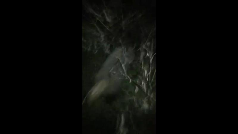 Дарвагские прни поймали в Новочеркасске барсука😂😂😂