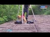 Чудесное спасение бездомной собаки