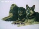 Служебное собаководство СССР 1988 год