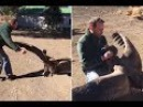 Condor moves in for a hug with the man that saved its life