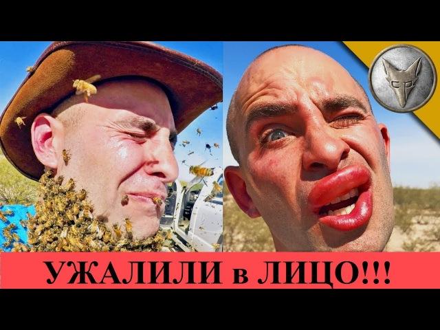 ПЧЕЛЫ ЖАЛЯТ В ЛИЦО.3000 ПЧЕЛ АТАКУЮТ.Brave Wilderness на русском