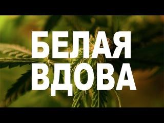 БЕЛАЯ ВДОВА - WHITE WIDOW