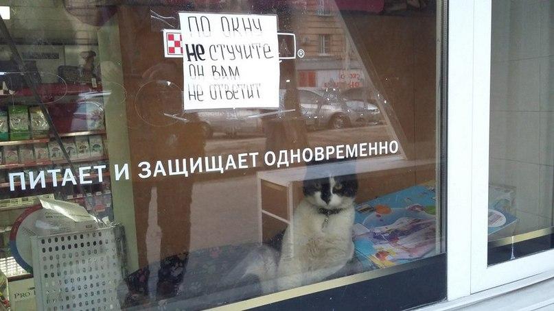 Питатель и защитник такой %)