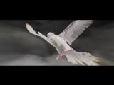 Zakk Wylde - Lost Prayer (Official Music Video) New HD