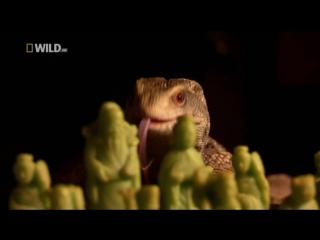 Король ящериц / Lizard kings (2009) - Документальный фильм